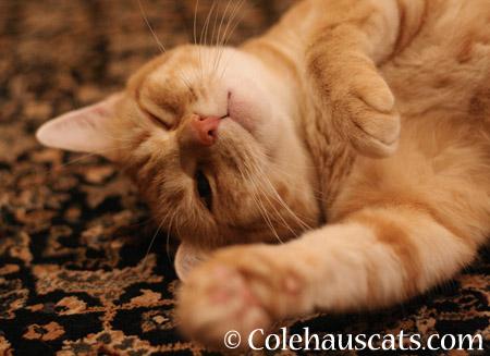 But mostly, Zuzu naps - 2014 © Colehaus Cats
