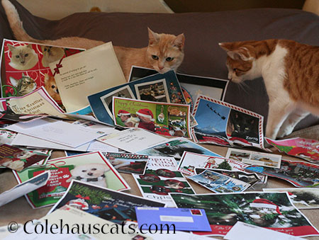 LOVE all the Christmas cards! - 2014 © Colehaus Cats