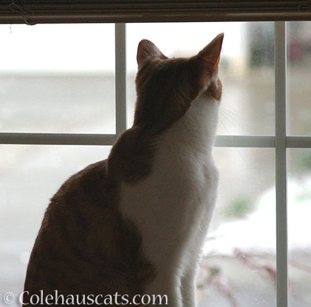 Looking for the New Year - 2015 © Colehaus Cats