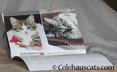 Maxx makes Calendar Boy! - 2014 © Colehaus Cats