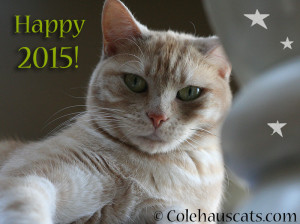 Miss Newton wishes you a Happy 2015! - © Colehauscats.com