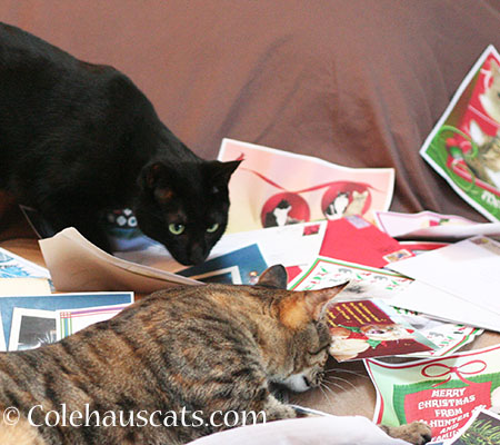 Olivia and Viola checking out the cards - 2014 © Colehaus Cats