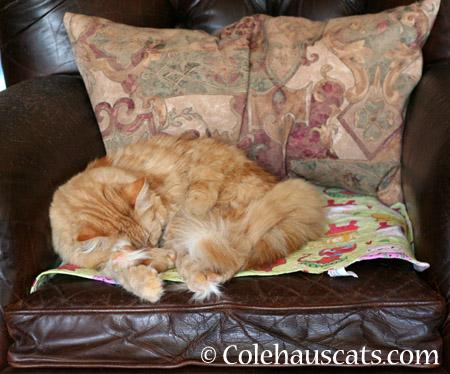 Pia naps - 2014 © Colehaus Cats