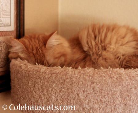 Even more Pia naps - 2014 © Colehaus Cats
