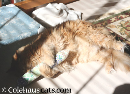 Pia napping with 'friend' - 2014 © Colehaus Cats