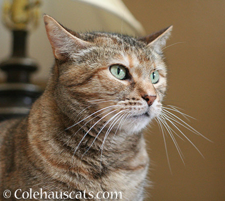 More Pretty Ruby - 2015 © Colehaus Cats