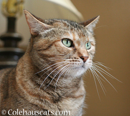 Even More Pretty Ruby - 2015 © Colehaus Cats