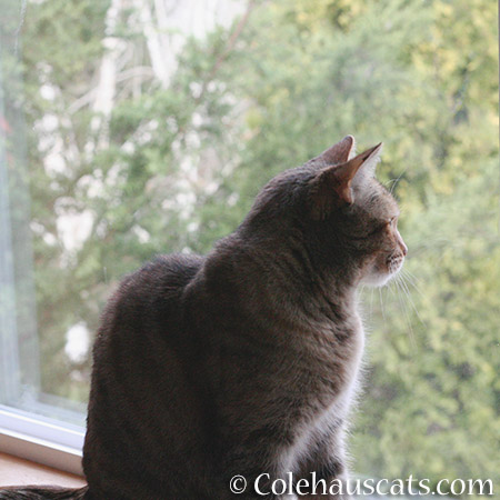 Squirrel TV time - 2015 © Colehaus Cats
