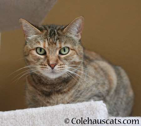 Ruby is all ears - 2014 © Colehaus Cats