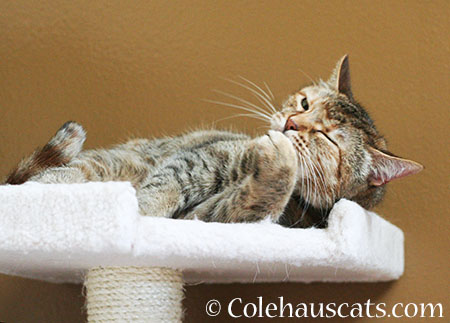 I'll Be Ready - 2015 © Colehaus Cats