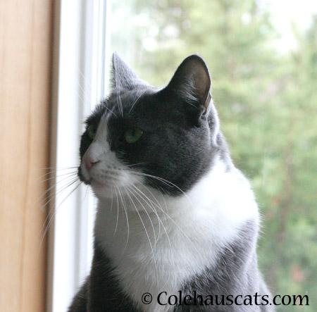 Hey! - 2014 © Colehaus Cats