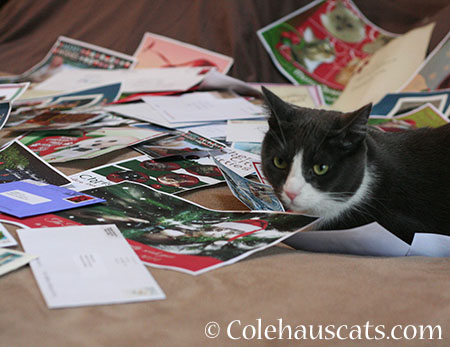 Tessa has selected her favorite - 2014 © Colehaus Cats