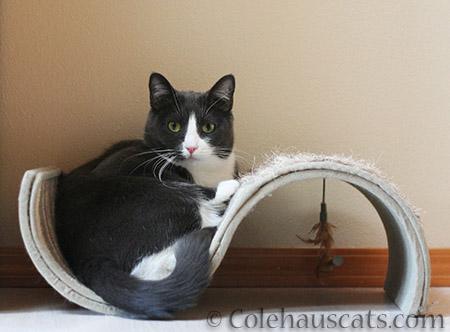 Tessa's Ess - 2015 © Colehaus Cats
