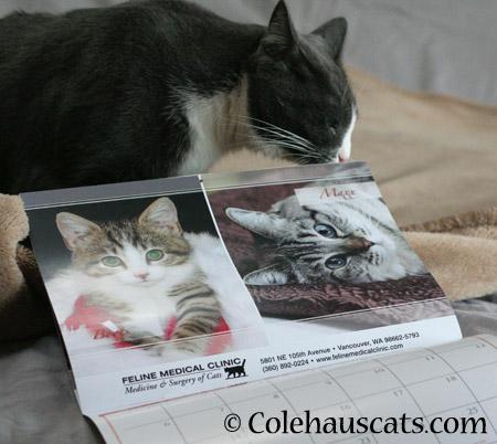 Tessa investigates - 2014 © Colehaus Cats