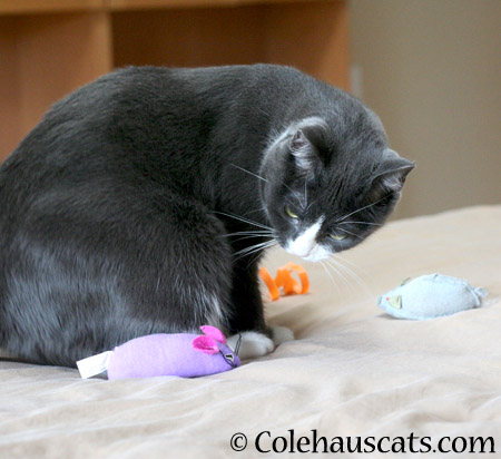 Purple mousie says - 2014 © Colehaus Cats