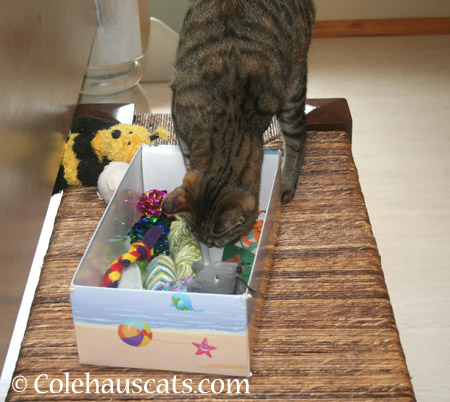 Lots of toys - 2014 © Colehaus Cats