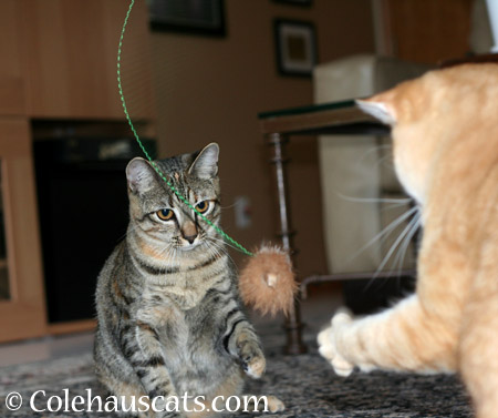 Whippy Toys - 2014 © Colehaus Cats