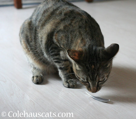 Feather Toys - 2014 © Colehaus Cats