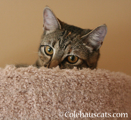 And a place to watch toys - 2014 © Colehaus Cats