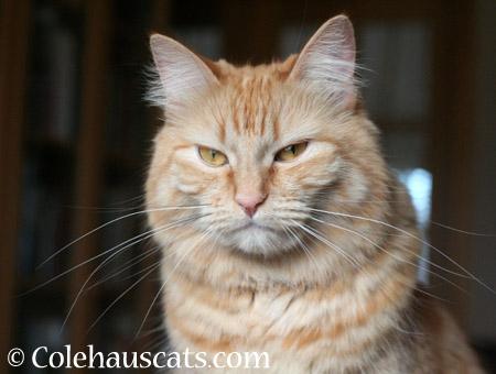 Displeased Pia - 2014 © Colehaus Cats