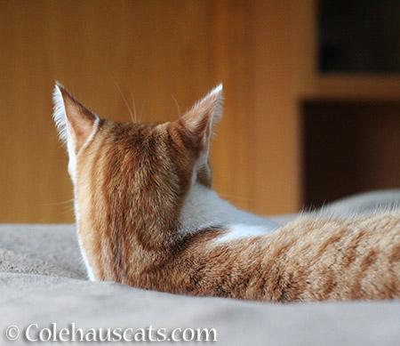 I can hear you - 2015 © Colehauscats.com