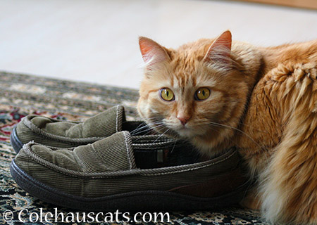 Pia's Slippers - 2015 © Colehauscats.com