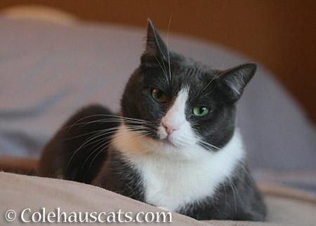 What? - 2015 © Colehauscats.com
