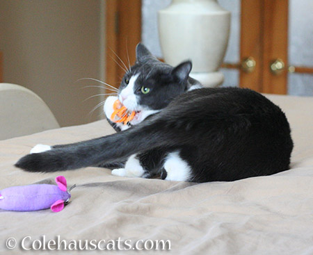 Bitey Toys - 2015 © Colehauscats.com