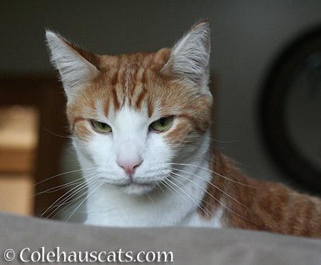 Nope! - 2015 © Colehauscats.com