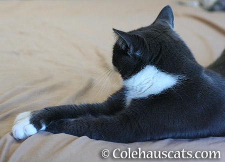 The Criss-Cross Paws I'm Ignoring You Pose - 2015 © Colehauscats.com