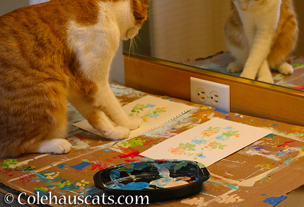 Quint using a new criss-cross paw painting technique - 2015 © Colehauscats.com