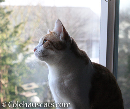 Quint watching for spring weather - 2015 © Colehauscats.com