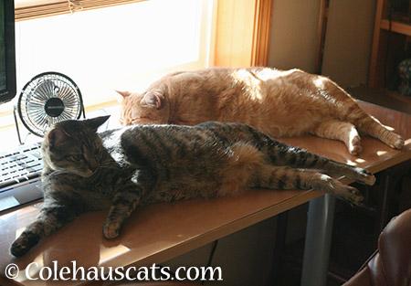 Viola and Zuzu together - 2015 © Colehauscats.com