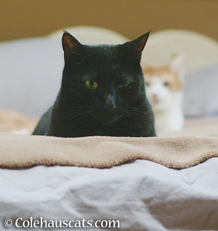 I'm watching... I mean, we're watching you - 2015 © Colehauscats.com