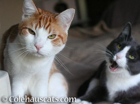 Quint and Tessa - 2015 © Colehauscats.com