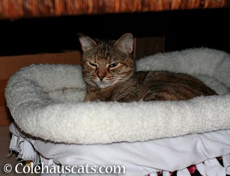 New bed? - 2015 © Colehauscats.com