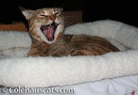 Good morning - 2015 © Colehauscats.com