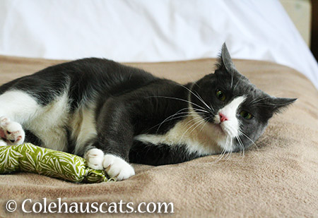 Tessa and her green kick stick - 2015 © Colehauscats.com