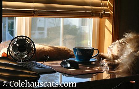 Hogging mom's desk - 2015 © Colehauscats.com