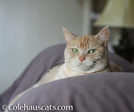 Miss Newton - 2015 © Colehauscats.com