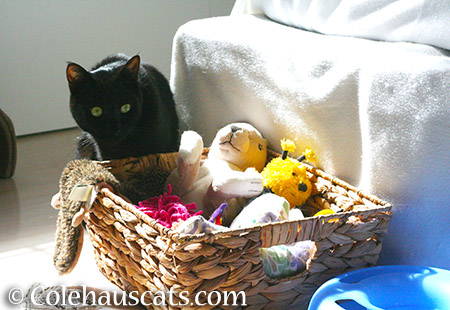 Olivia hoarding the toys - 2015 © Colehauscats.com