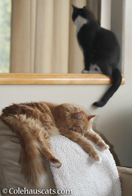 Pia and Tessa - 2015 © Colehauscats.com