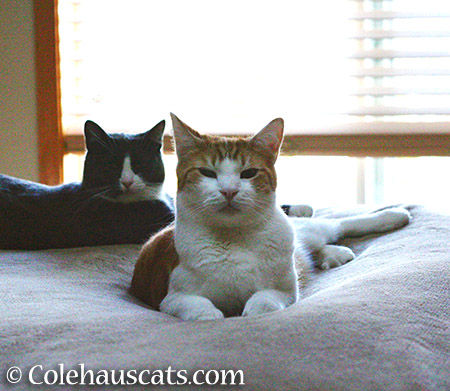 Tessa and Quint - 2015 © Colehauscats.com