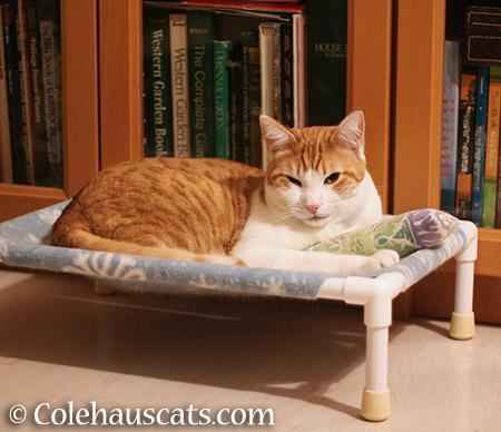 Quint in a Hammick -2015 © Colehauscats.com