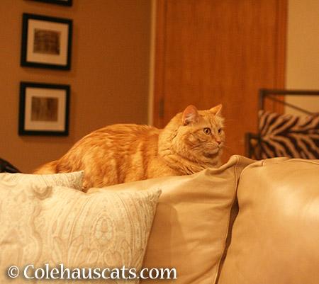 Still Life Pia - 2015 © Colehauscats.com