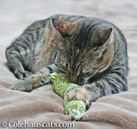 Viola with Tessa's kickstick - 2015 © Colehauscats.com