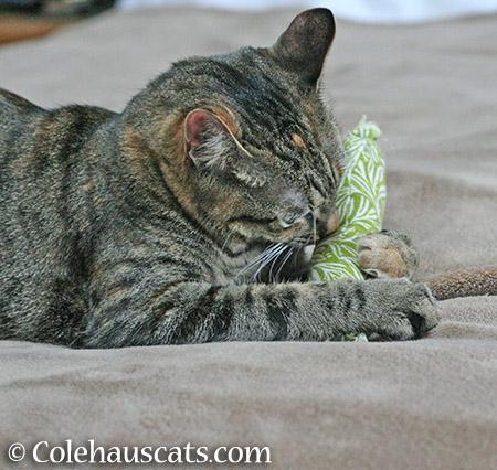 Mmm - 2015 © Colehauscats.com