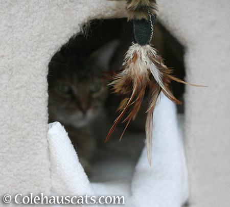 Tempting, no? - 2015 © Colehauscats.com