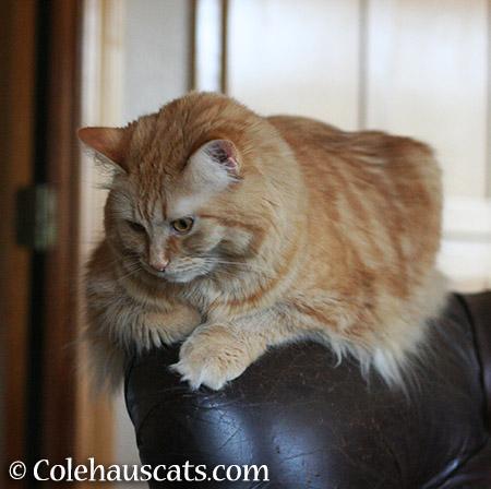 Pretty Pia - 2015 © Colehauscats.com