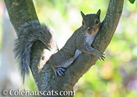 Lounging squirrel - 2015 © Colehauscats.com